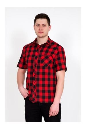 Рубашка мужская Армандо 3365